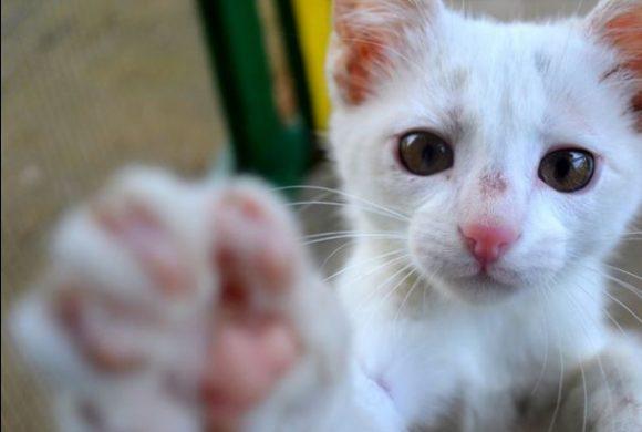 Kačių sterilizavimo akcijos